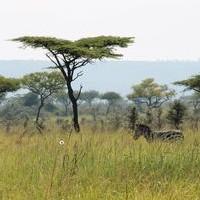 Projekte in Kenia